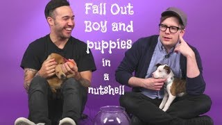FALL OUT BOY AND PUPPIES IN A NUTSHELL (crack edits)