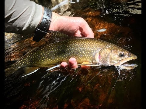 Fly Fishing Red Water For Big Brook Trout | Red Run West Virginia