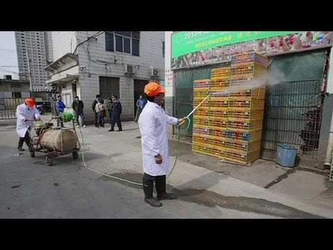No need to flap over China's bird flu - WHO doctors