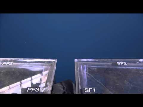 Virtual Vents - ROPOS Dive R1920 - Science Sampling