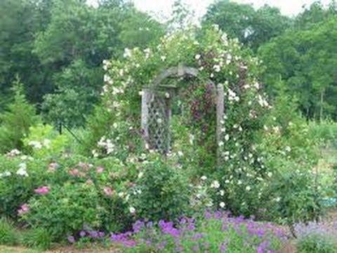 A Beautiful Out Door Garden In Kerala Youtube