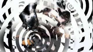 гипоаллергенный корм для собак(, 2014-10-20T12:18:06.000Z)