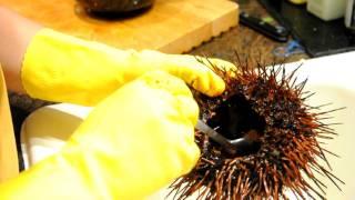 殺海膽 How to kill  live Uni (Sea Urchin)