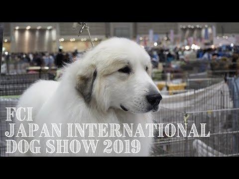 アランのドッグショー FCI Japan International Dog Show 2019