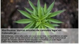 Arranca operaciones primer dispensario de marihuana medicinal …