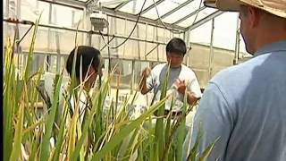 USA Rice Federation's Production Video 2012.mov
