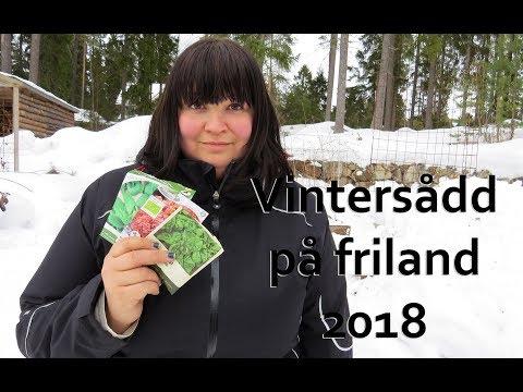vintersådd på friland 2018