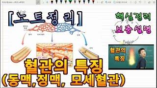 [노트정리][중학교][고등학교] 혈관의 특징(동맥, 정…