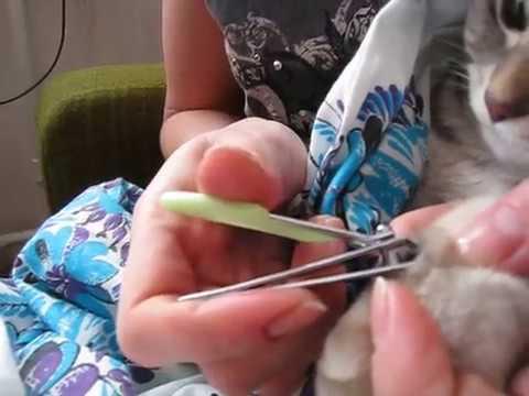 Как правильно обрезать когти коту. Как подстричь когти кошке