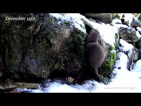 A Very Cute Over-excited Weasel Makes This Wildlife Advent Calendar