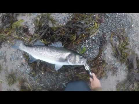 Bass Fishing Uk