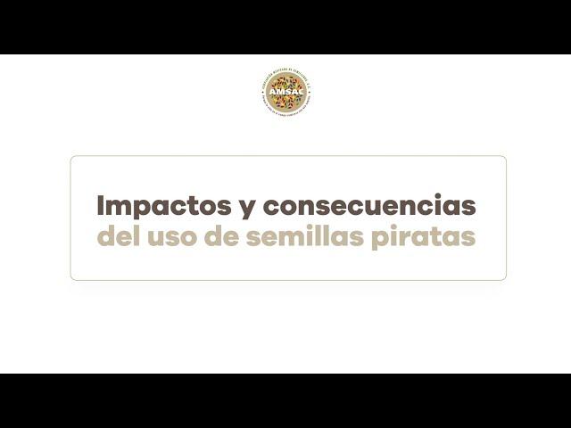 Impactos y consecuencias del uso de semillas piratas
