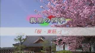 第01回 桜 -東筋-