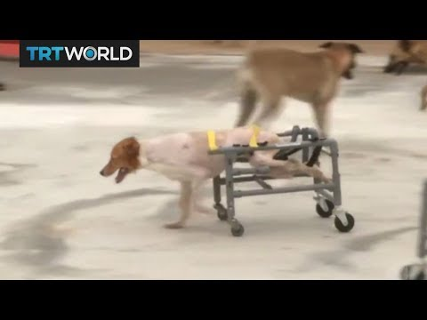Doggie Hot Wheels: Taiwan man makes wheelchairs for dogs