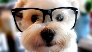 Слепые собаки носят очки показ слайдов 2015!(, 2015-04-21T14:35:21.000Z)