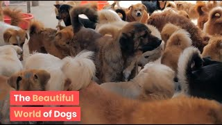 The Beautiful World of Dogs