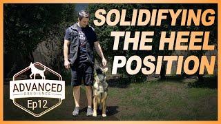 Dog Training | Solidifying the Heel Position