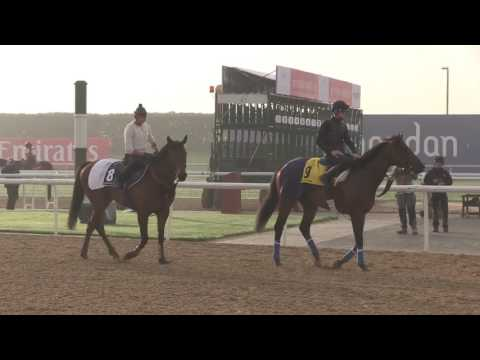 Dubai World Cup Morning Training March 23, 2017 - Part 4