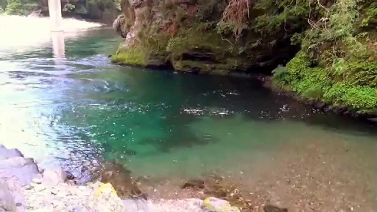 根尾川の上流② - YouTube