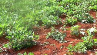 Blossom's Farm in Jamaica