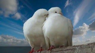 """Поёт Валерий Сёмин. """"ОПУСТЕВШАЯ СИНЬ"""" (на музыку из фильма """"Любовь и голуби"""")"""