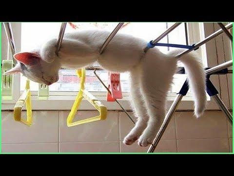 Vídeos engraçados para animais de estimação 2019 ♥ Cães e gatos fofos fazendo coisas engraçadas P16
