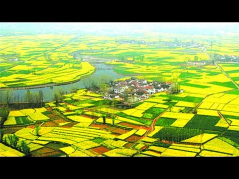Bellas flores de canola en Hanzhong de la provincia Shaanxi, China