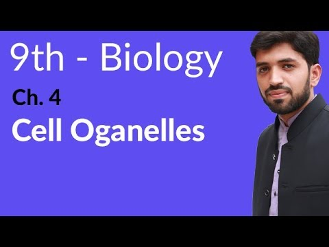 Cell Organelles Biology - Biology Chapter 4 Cell biology - 9th Class