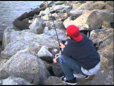 Reelinfish episode 11 a day of fishing the jetty in seal for Seal beach fishing