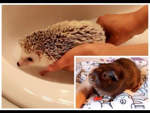 Hedgehog Foot Bath & New Video Series Announcement