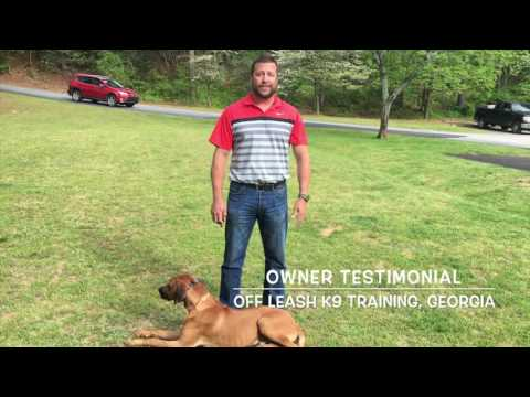 Owner Testimonial | Rhodesian Ridgeback | Off Leash K9 Training, Georgia