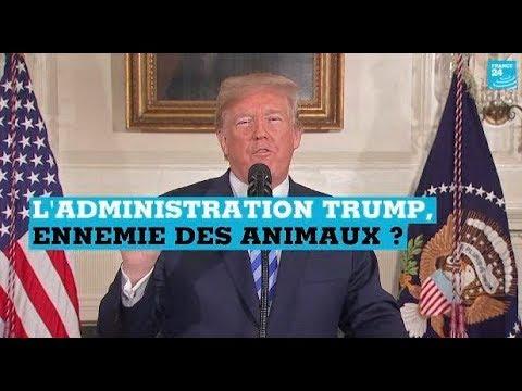 L'administration Trump, ennemie des animaux ?