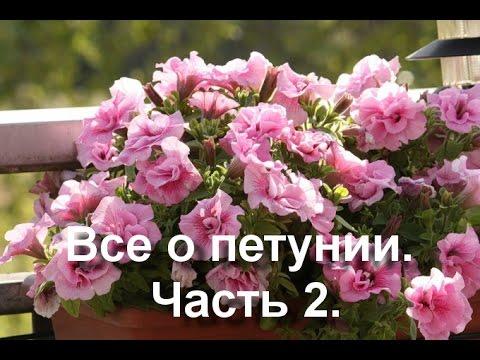 Сочетания растений и цветов на клумбе по форме, цвету и
