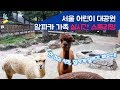알파카 라이브 - 서울어린이대공원 Alpaca live streaming 170724