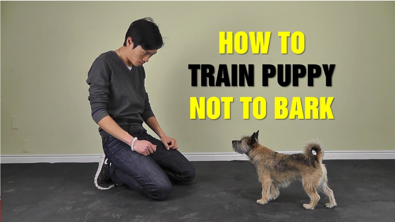 Online Dog Training: How To Train Puppy Not To Bark - Teach Dog to ... | Training Dog To Not Bark