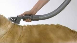 Dyson Groom Vacuum Cleaner - Dog Grooming Tool