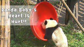 Ouch! This Panda's Heart Is Badly Hurt! | iPanda