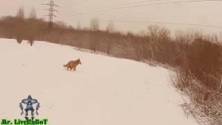 Mr. LiveRoBoT - Рыжая Собака ЧАППИ Бегает, Играется и Не Кусается. Ушки Забавные