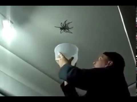 Wielki pająk