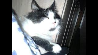 Кот Борис смотреть смешные видео про котов#Супер кот#черно белый кот