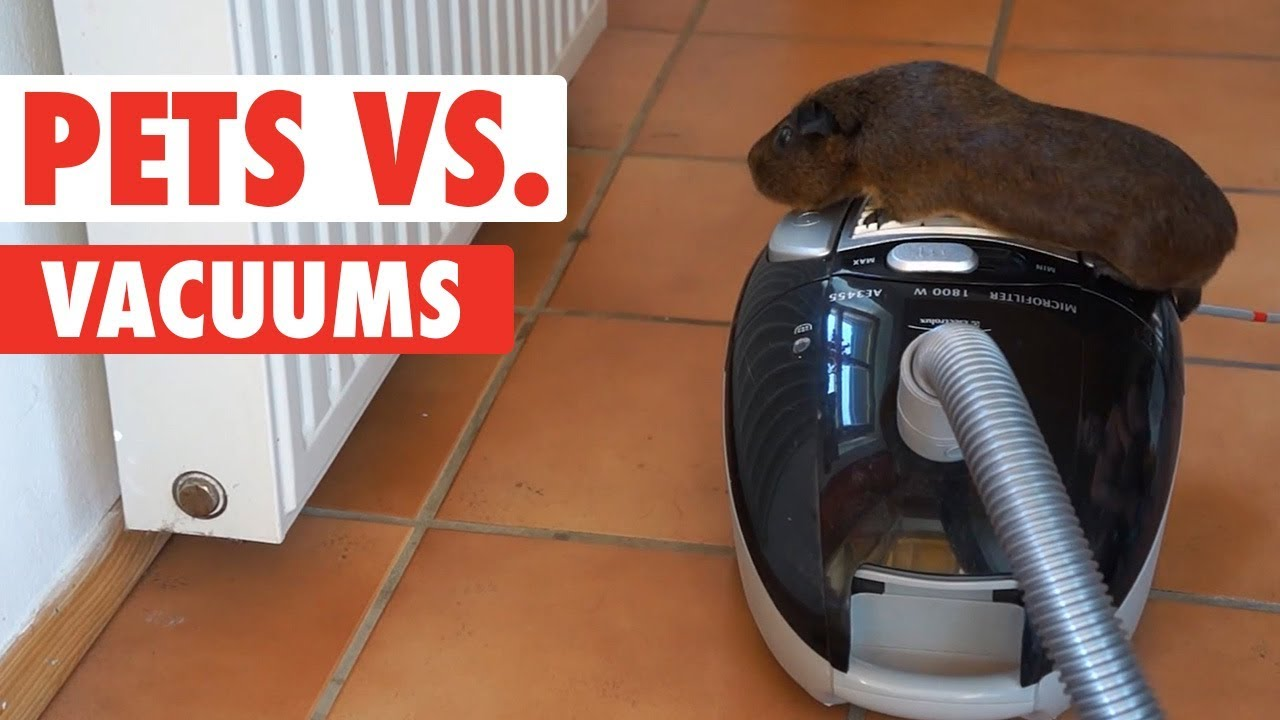 Pets vs. Vacuums | Funny Pet Video Compilation 2018