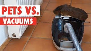 Pets vs. Vacuums | Funny Pet Video Compilation 2018