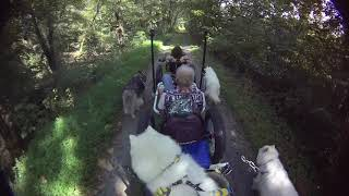 Dog Entertainment |FurWheeling C&O Towpath Paw Paw To Little Orleans | Dog Music | Dog Relaxation
