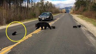 Driver That Spots A Bear Cub In The Road Notices One Alarming Detail