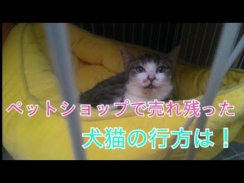 ショップ 売れ残り 猫 ペット ペットショップで売れ残った犬や猫、その後どうなるの?