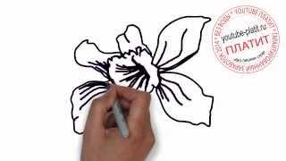 Цветы нарисованные карандашом  Как нарисовать цветы синий ландыш(Как нарисовать дружную семью поэтапно карандашом за короткий промежуток времени. Видео рассказывает о..., 2014-07-02T05:48:36.000Z)