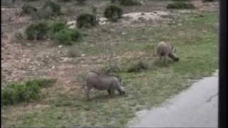 南アフリカ共和国の東ケープ州にある、南アフリカの中で最も自然保護活...