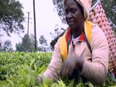 East African Tea Trade Association Corporate Video