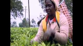East African Tea Trade Association Corporate Video