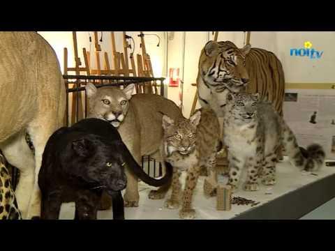A Calci la pù grande mostra di felini in Italia